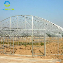 Single Span Plastic Film Agricultural Tunnel Greenhouse
