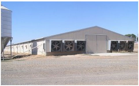 prefabricated chicken egg poultry farm