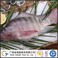 Good Taste Seafood Frozen Whole Round Black Tilapia Fish For Buyer