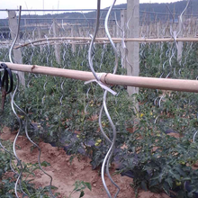 Tomato Growing spiral/plant support wire