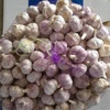 /product-detail/4-5cm-5cm-5-5cm-china-normal-white-pure-white-garlic-60690936571.html