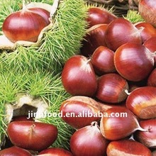 fresh chestnut/canned chestnuts/bottled chestnut
