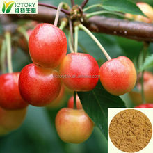 Factory supply Acerola cherry extract