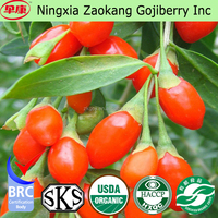 2016 new arrival hot sale Chinese certified organic bulk Dried Goji Berries