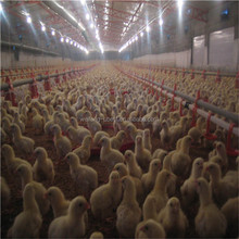 Controlled Poultry farm/Broiler farm/Chicken pen
