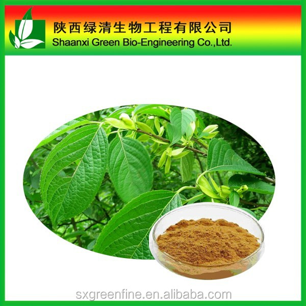 100% natural Cortex eucommiae P.E. Chlorogenic Acid