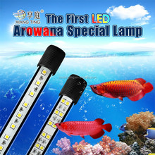 red LED dlive lights for arowana fish