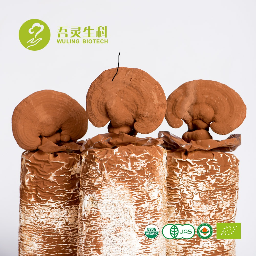 professional manufacturer wild growing buy reishi mushrooms dried for free sample
