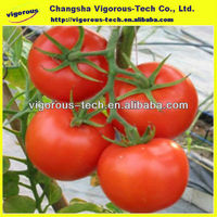 Natural Nutraceutical formulations for tomato paste lycopene