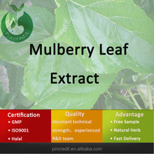 mulberry leaf powder/mulberry leaf tea/mulberry leaf extract