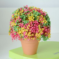preserved flower baby breath Real and natural dried baby breath Never fade flower for festival gift