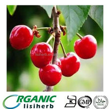 Best Quality Acerola cherry extract VC 17% powder with competitive price