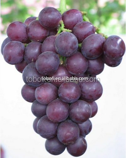 2017 Chinese fresh fruits new crop red grape