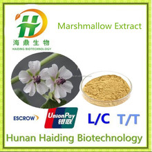 Supply bulk quantity Marshmallow Root Extract,Best Quality of Althea Extract