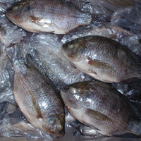 Supplier of Tilapia Bream 400-600g Frozen Fish Nile Whole Sale Price