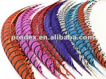 Lady Amherst Pheasant tail feathers