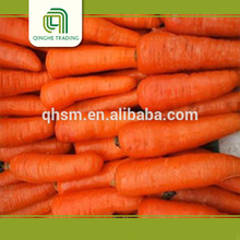 good brand vegetables fresh carrot powder from china