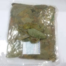 Dried or Fresh Soursop Leaves tea from Annona muricata Linn for anti tumor herb