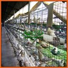Innaer manufacturer supply pigeon house for poultry farm