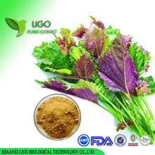 Perilla powder / Dried Perilla leaf / Perilla leaf extract