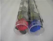 Hot Sale Austin Preserved Rose Flower For Gift Home Decoration From China