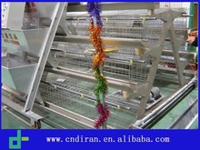 Best Sale Chicken Egg Layer Cages in South Africa A Type Multi-tier Layer Chicken Cage