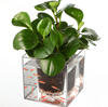 Cube Plastic Planter 12cm Transparent Home