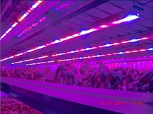 Wholesale best led grow light tube T8 led aluminum alloy 20W led plant grow light horticulture light