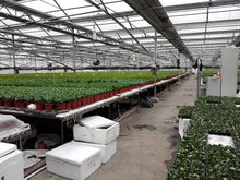 Agricultural Planting Greenhouse raised seed bed planter