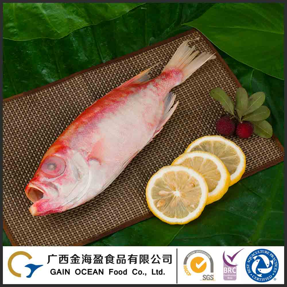 Wholesale Factory Direct Price Natural Prianthus Tayenus Frozen Food