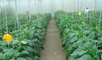 Polycarbonate Sheet Greenhouse