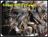 Whosale Organic Pet Food Freeze Dried Crickets :Pet Bird Most Love Dried Cricket