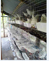 hot selling in china of pigeons cages for pigeon racing HJ-PC32
