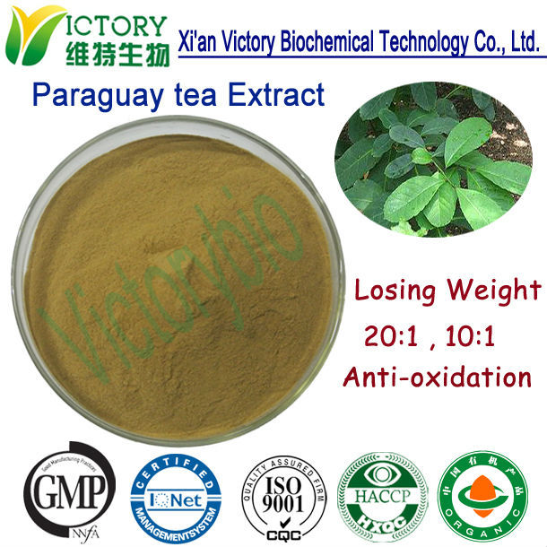 100% Nature Yerba Mate herbal extract for lossing weight