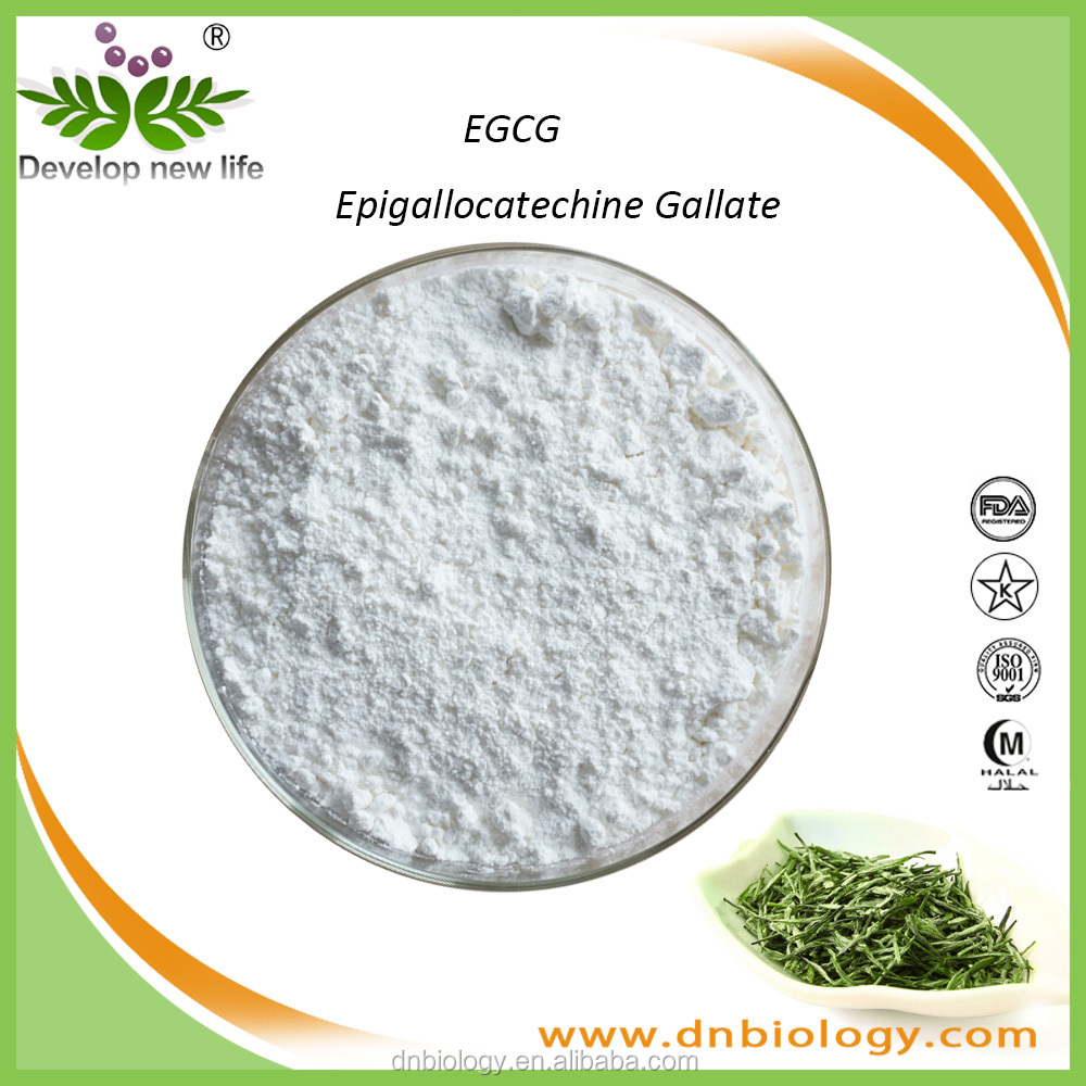 Factory Supply Green Tea Extract L-Theanine / EGCG / Catechin