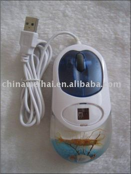 computer mouse real insects resin