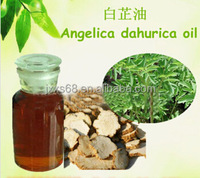 Factory direct supply with competitive price 100% Natural Angelica Dahurica curica Extract for medical care
