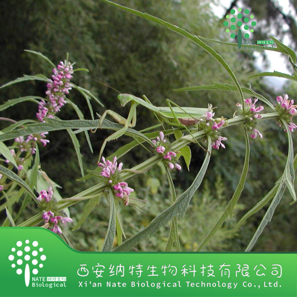 Natural Chinese Plant Extract Motherwort Extractum,Motherwort Herb Extract Powder,Yi Mu Cao Powder
