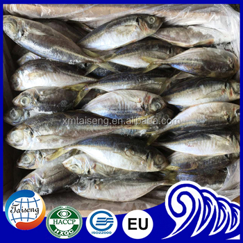 how to cook canned mackerel fish