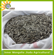 Long American Type Sunflower seeds