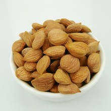2017 new crop Bitter apricot kernels for sale Sweet apricot kernel
