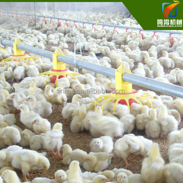 poultry farm equipment adjustable chicken feeder automatic