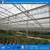 Plastic Film Tunnel Greenhouse For Tomato