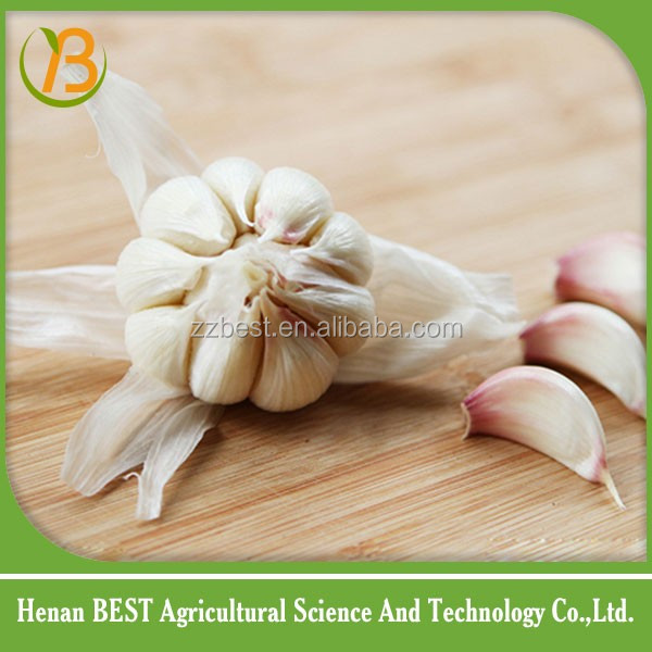german red garlic from China