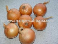 chinese yellow onion