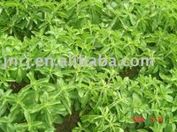 stevia leaves extract