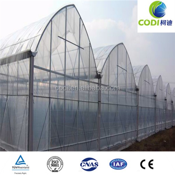 Hot sale rain shelter venlo china multi span greenhouse for vegetable