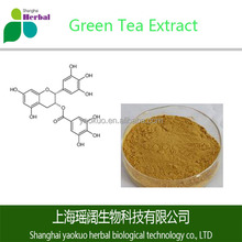 Instant Green Tea/Green Tea Extract/Green Tea Polyphenol Powder