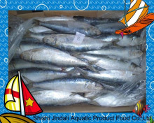 Fish product type and frozen style frozen sardinops sagax