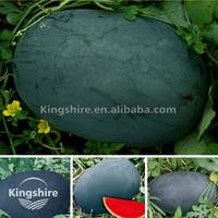 Black General F1 Big Size Good Quality Watermelon seed